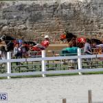 Harness Pony Racing Bermuda, November 13 2017_7753