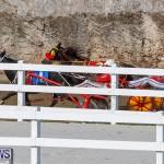 Harness Pony Racing Bermuda, November 13 2017_7777