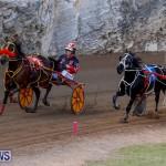 Harness Pony Racing Bermuda, November 13 2017_7788