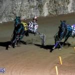 Harness Pony Racing Bermuda, November 4 2017_3239