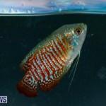 Tropical Fish Show Bermuda, November 11 2017_6084