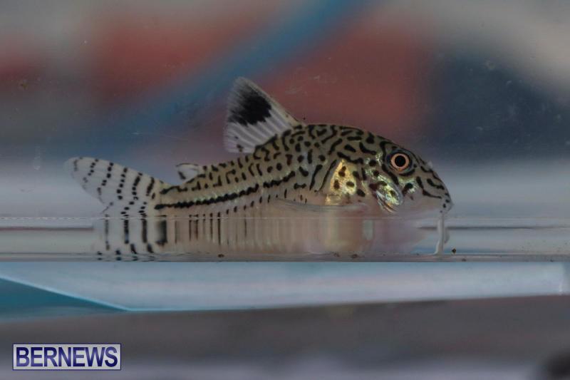 Tropical-Fish-Show-Bermuda-November-11-2017_6095