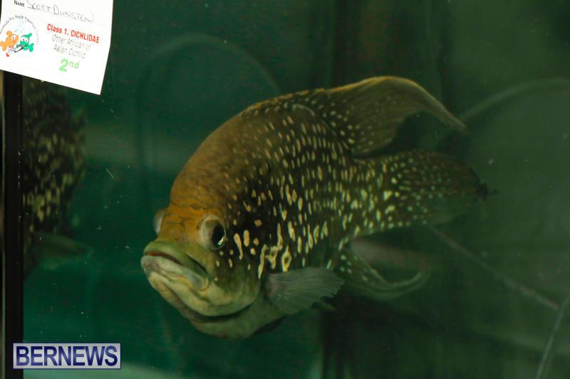 Tropical-Fish-Show-Bermuda-November-11-2017_6108