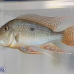 Tropical Fish Show Bermuda, November 11 2017_6109