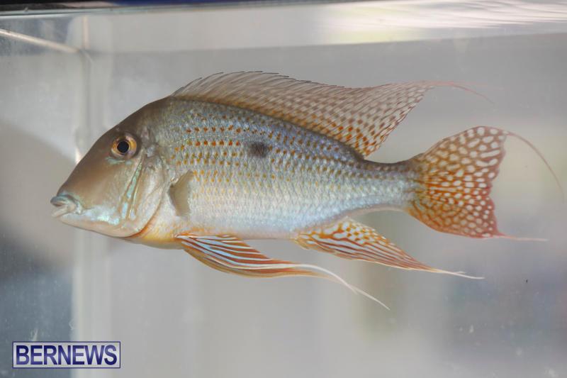 Tropical-Fish-Show-Bermuda-November-11-2017_6109