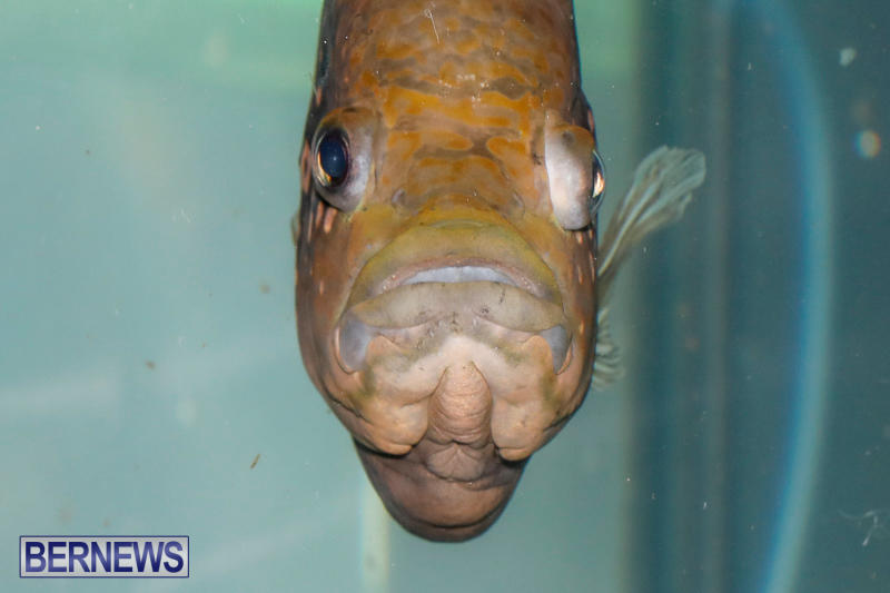 Tropical-Fish-Show-Bermuda-November-11-2017_6126