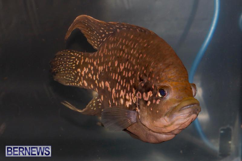 Tropical-Fish-Show-Bermuda-November-11-2017_6138