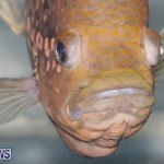 Tropical Fish Show Bermuda, November 11 2017_6145