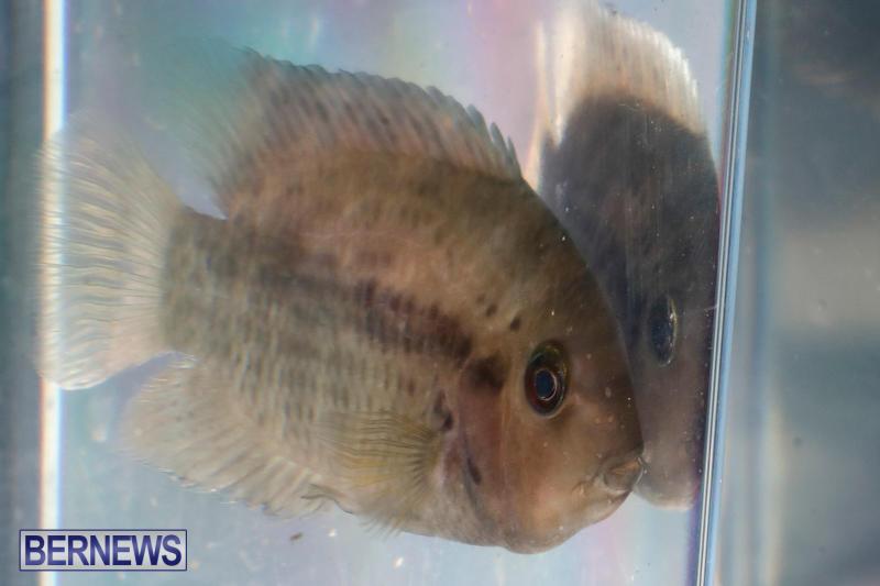 Tropical-Fish-Show-Bermuda-November-11-2017_6182