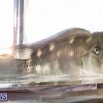 Tropical Fish Show Bermuda, November 11 2017_6228