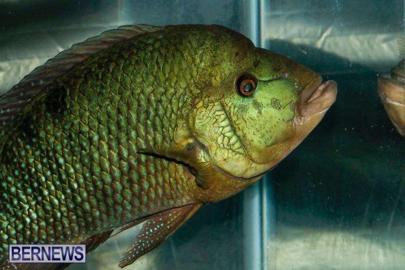 Tropical-Fish-Show-Bermuda-November-11-2017_6240