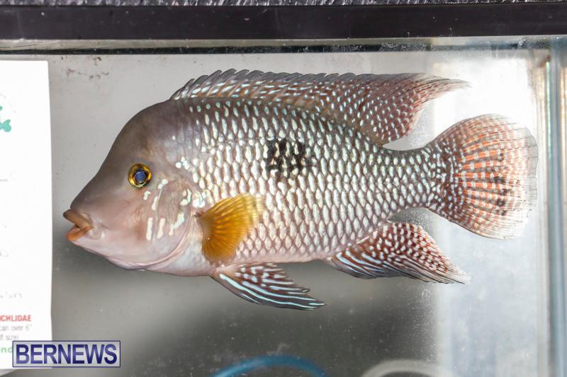 Tropical-Fish-Show-Bermuda-November-11-2017_6251