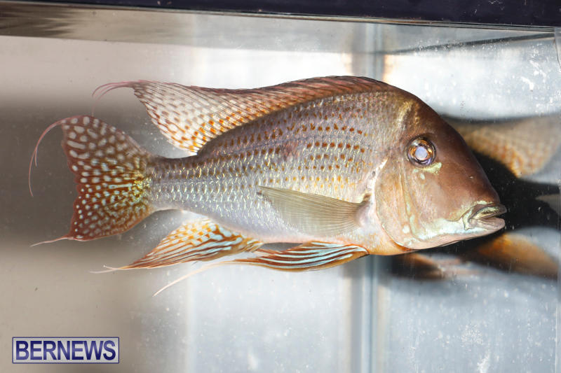 Tropical-Fish-Show-Bermuda-November-11-2017_6263