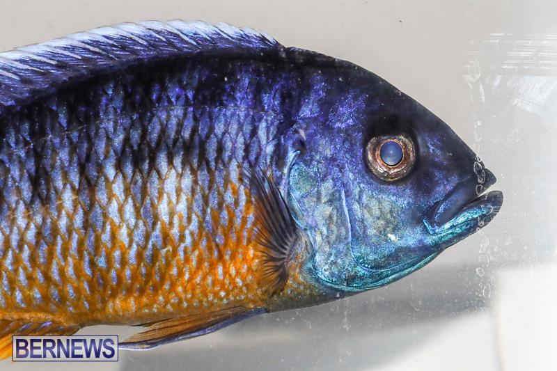 Tropical-Fish-Show-Bermuda-November-11-2017_6265