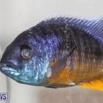 Tropical Fish Show Bermuda, November 11 2017_6271