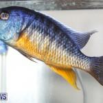 Tropical Fish Show Bermuda, November 11 2017_6277