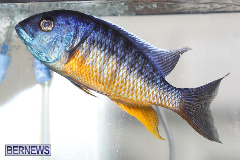 Tropical-Fish-Show-Bermuda-November-11-2017_6277