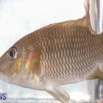 Tropical Fish Show Bermuda, November 11 2017_6301