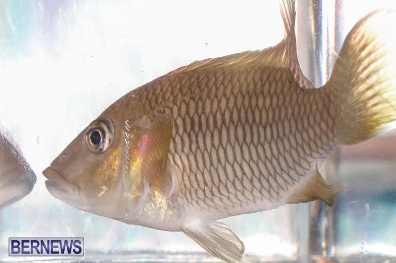 Tropical-Fish-Show-Bermuda-November-11-2017_6301