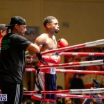 Undefeated Boxing Bermuda, November 11 2017_7125