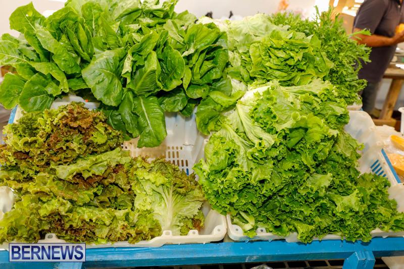 Bermuda-Farmers-Market-at-Botanical-Gardens-December-2-2017_2700