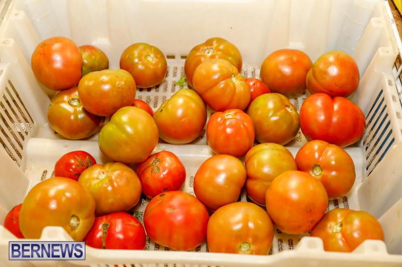 Bermuda-Farmers-Market-at-Botanical-Gardens-December-2-2017_2702