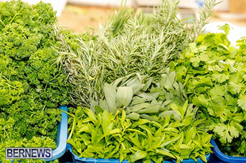 Bermuda-Farmers-Market-at-Botanical-Gardens-December-2-2017_2704