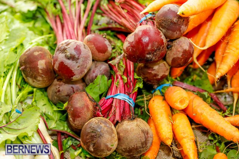 Bermuda-Farmers-Market-at-Botanical-Gardens-December-2-2017_2709