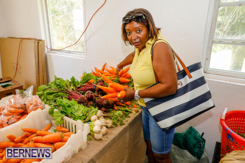 Bermuda-Farmers-Market-at-Botanical-Gardens-December-2-2017_2710