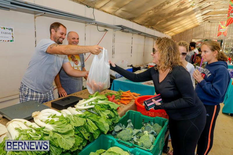 Bermuda-Farmers-Market-at-Botanical-Gardens-December-2-2017_2747