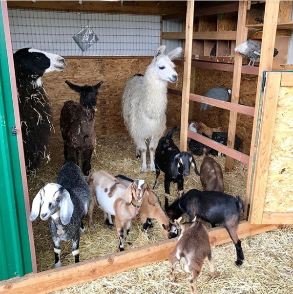 Butterfield's farm-life Bermuda Dec 14 2017 (1)