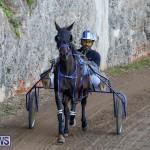 Harness Pony Racing Bermuda, December 17 2017-5495