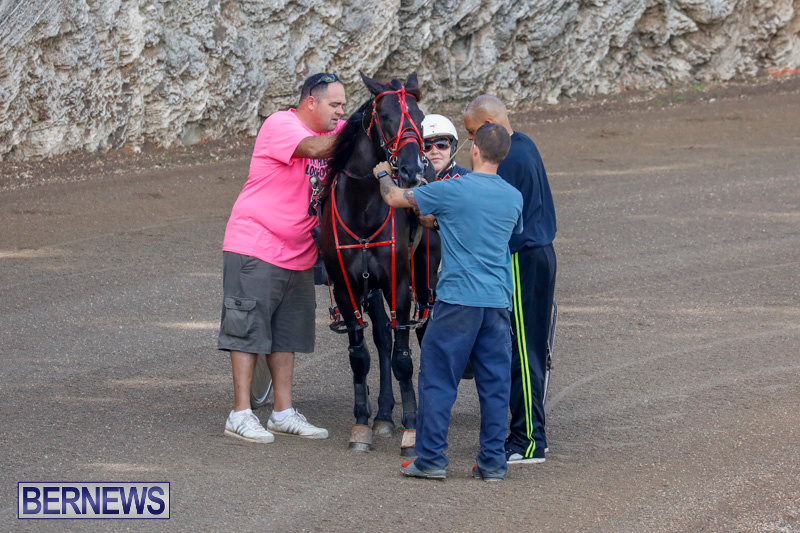 Harness-Pony-Racing-Bermuda-December-26-2017-8138