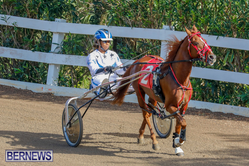 Harness-Pony-Racing-Bermuda-December-26-2017-8151