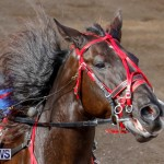 Harness Pony Racing Bermuda, December 26 2017-8195