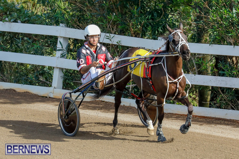 Harness-Pony-Racing-Bermuda-December-26-2017-8339
