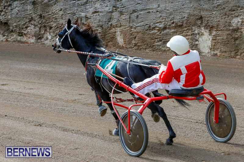 Harness-Pony-Racing-Bermuda-December-26-2017-8424