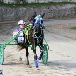 Horses Bermuda Dec 20 2017 (11)