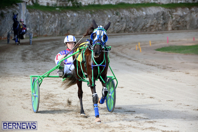Horses-Bermuda-Dec-20-2017-11