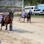 Horses Bermuda Dec 20 2017 (14)