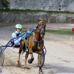 Horses Bermuda Dec 20 2017 (16)