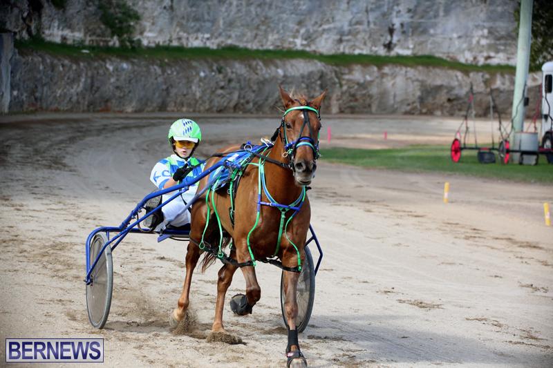 Horses-Bermuda-Dec-20-2017-16