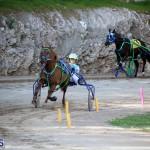 Horses Bermuda Dec 20 2017 (17)