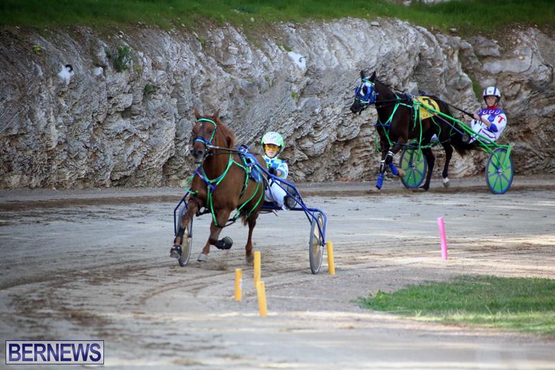 Horses-Bermuda-Dec-20-2017-17