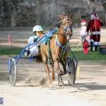 Horses Bermuda Dec 20 2017 (19)