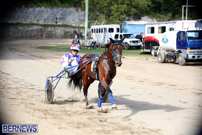 Horses-Bermuda-Dec-20-2017-7