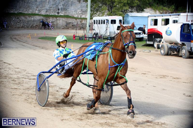 Horses-Bermuda-Dec-20-2017-8