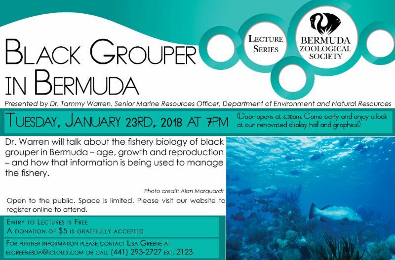 BZS - Black Grouper In Bermuda