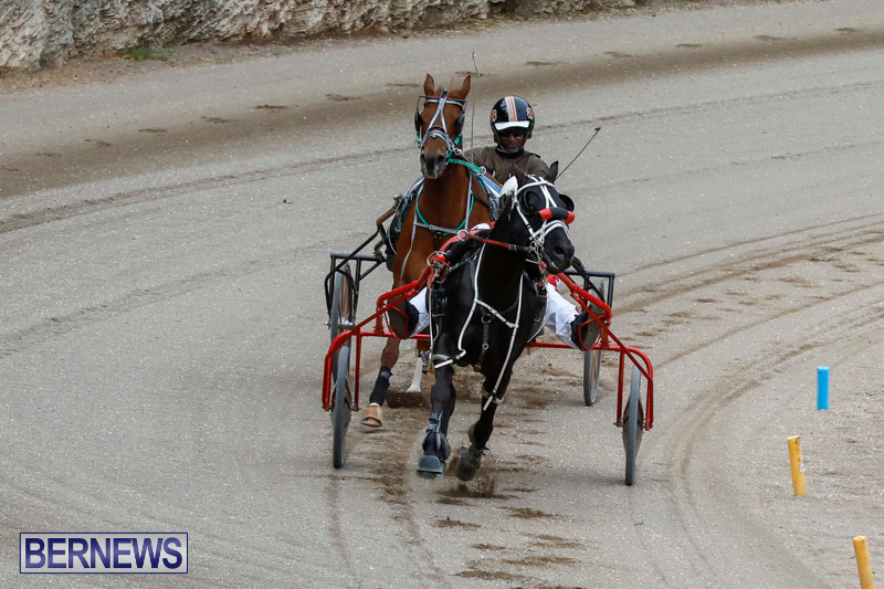 Harness-Pony-Racing-Bermuda-January-28-2018-6338