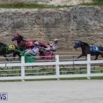 Harness Pony Racing Bermuda, January 28 2018-6484